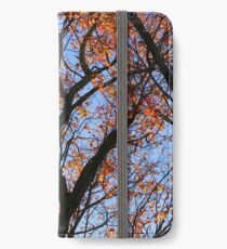 Fall Tree on the Hiking Trail iPhone Wallet/Case/Skin