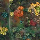 Fall colours from above 2 by Oleksii Rybakov