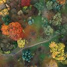 Fall colours from above 3 by Oleksii Rybakov