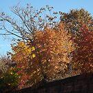 Autumn Colors, Harsimus Branch Embankment, Jersey City by lenspiro