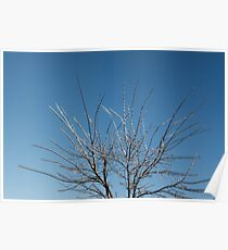 Christmas Decorations by Mother Nature - Brilliant Blue and White Glow in the Sky Poster
