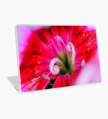 Dianthus carzophyllus close-up Laptop Skin