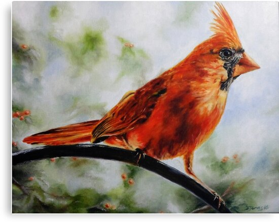 Northern Cardinal in winter by Steven James