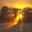 Misty Sunrise Through Trees. Lake Macquarie. by sunnypicsoz