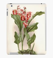 Reichenbachia Orchids illustrated and described by F. Sander 1888 V1-V2 017 iPad Case/Skin