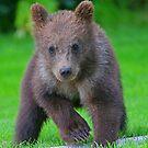 Bear Cub! by Anthony Goldman