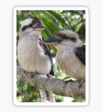 Laughing Kookaburras Sticker