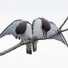 White-breast wood-swallows by Janette Rodgers