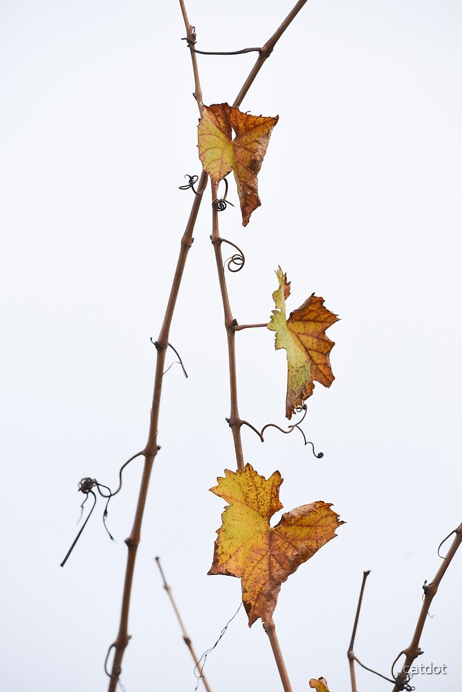Autumn Vines by catdot