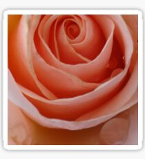Coral Rose Sticker