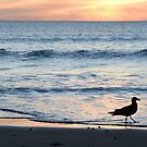 Gull on the beach by catdot
