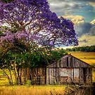 Rural Life.. by Tracie Louise