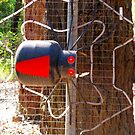 Redback Spider Mailbox by Marilyn Harris