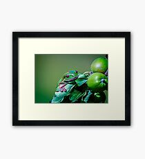 Apple Frog.... Framed Print