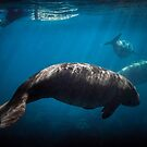 Dugong and Surfer by Peter Carroll