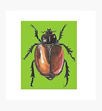 Insect drawing Photographic Print