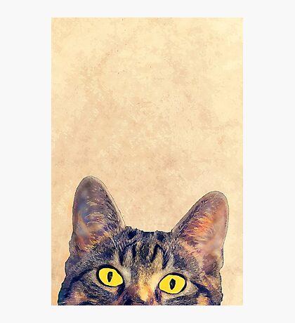hidden cat 2 Photographic Print