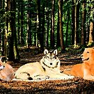 3Canines by storecee