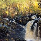 Rogie Falls by Stephen Frost