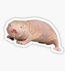 Naked mole rat Sticker