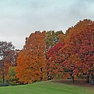 Rolling Hills Of Wisconsin In Autumn by kkphoto1