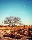 Tree by Briana McNair