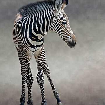 Dreams in Black and White (Grevy's Zebra) by KrysBailey