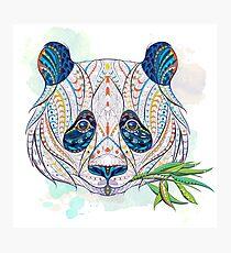 Ethnic Highly Detailed Panda Photographic Print