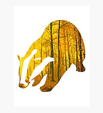 Badger yellow forest Photographic Print