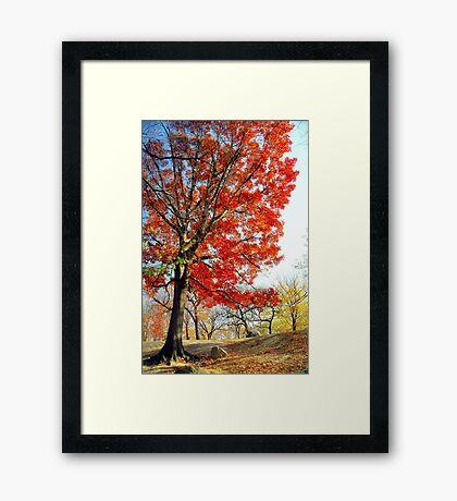 Little Red Tree, Central Park Framed Print