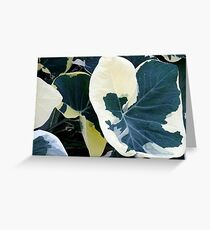 Variegated Delight Greeting Card
