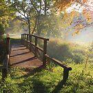 Misty Morning by Marija