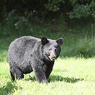 Boo Our Neighborhood Bear by gypsykatz