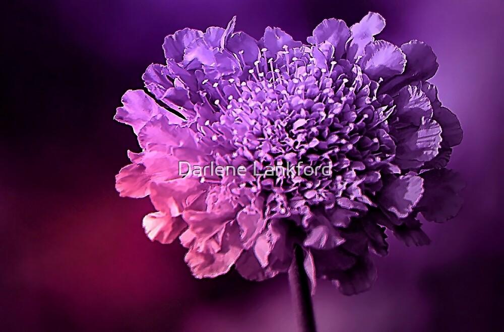 Purple Power by Darlene Lankford Honeycutt