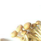 I love mushroom by Caplin
