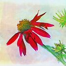 Red Gerbera Graphic by Darlene Lankford Honeycutt
