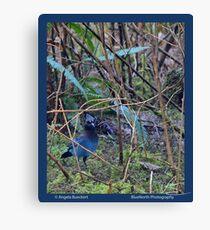 Forest Stellar Jay Canvas Print