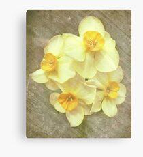 NARCISSUS BEAUTIFUL EYES (Daffodils) Canvas Print