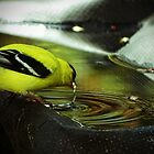 Thirsty Goldfinch by Rosemary Sobiera