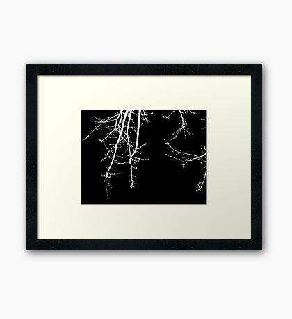 Blossom - White on Black Framed Print