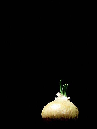 Onion by John Ayo