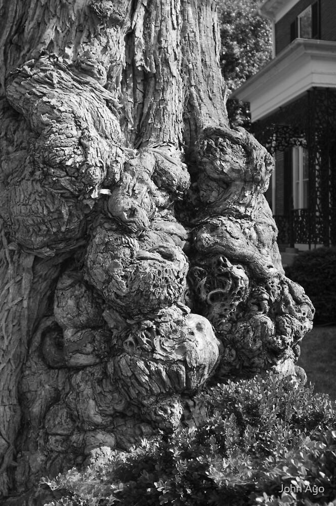 Tree Of Lost Souls by John Ayo