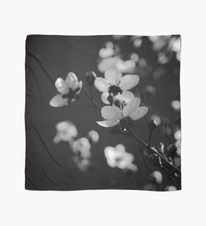 Spring in Black & White Scarf