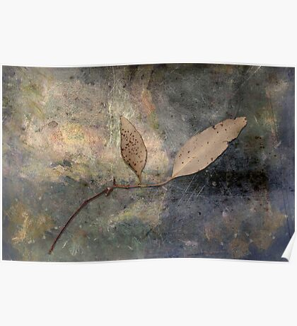 Gum leaves on an afternoon at home Poster