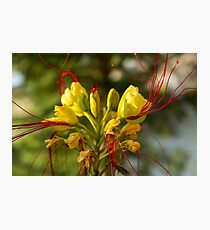 Wild Fantastic Flower - Nature Photography Photographic Print