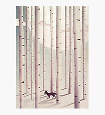 Serene Forest Photographic Print