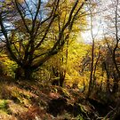 The forest at Bracklin Falls in Callander by Jeremy Lavender Photography