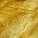 Golden Grain by himmstudios