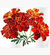 Bouquet of Marigolds Poster