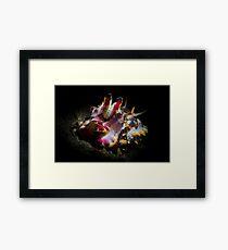 Sepia flamboyant Framed Print